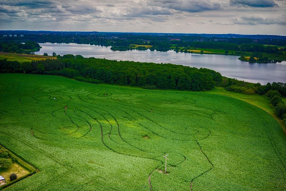 Das Mais-Labyrinth in Sieversdorf bei Preetz